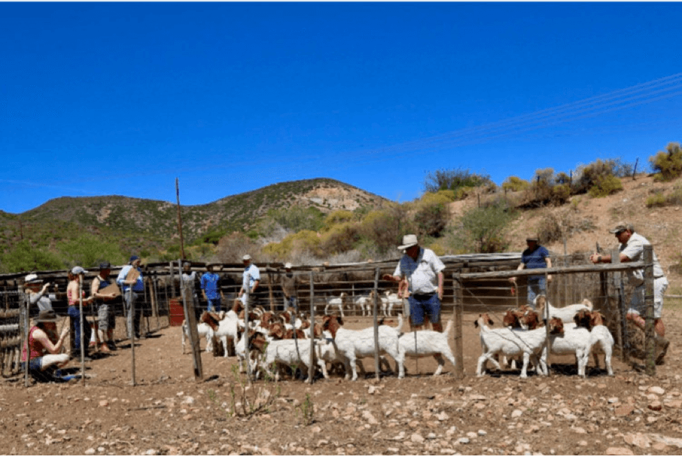 South African Judging Training Course – By Jo Jenkins, Hornets Herd.