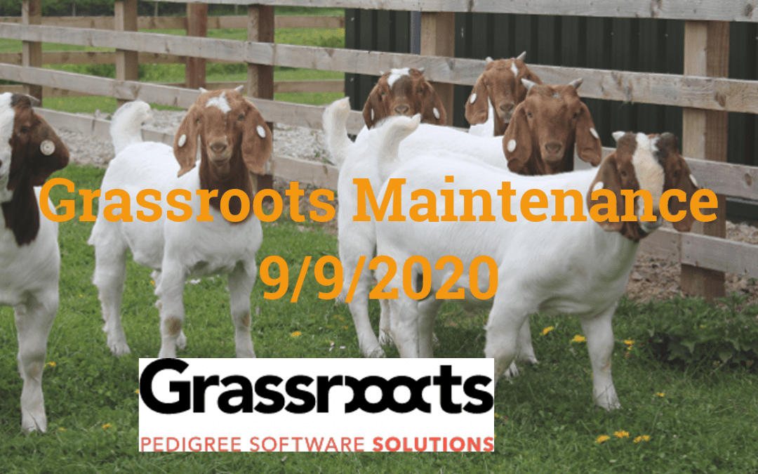 Grassroots Maintenance September 2020