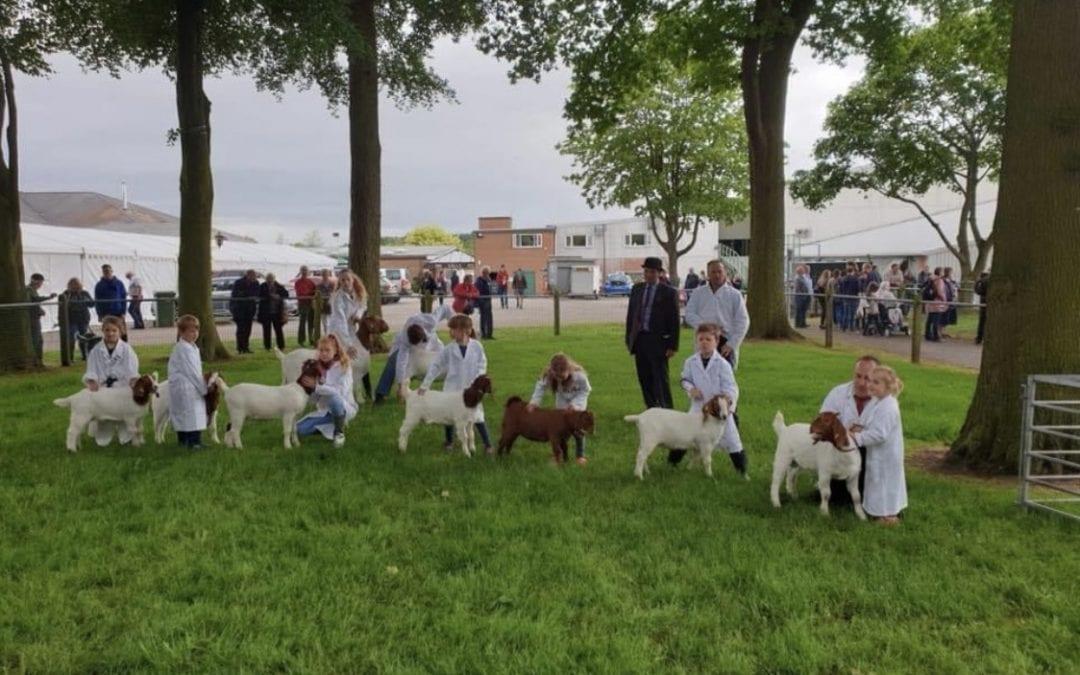 Brtish Boer Goat Society Show 2021